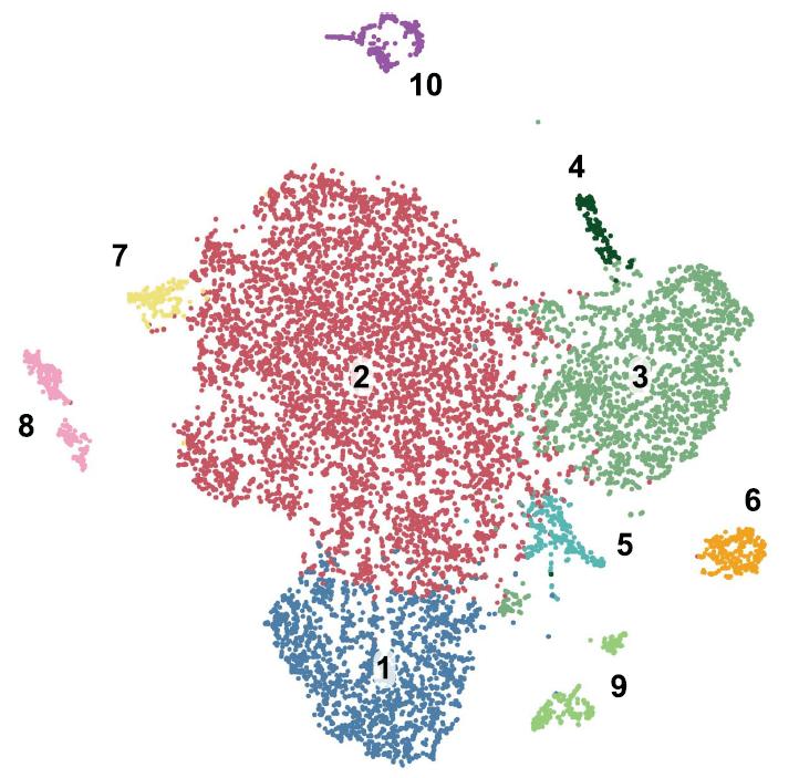 Single Cell RNA Seq analysis
